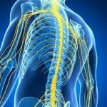 spine chiropractor